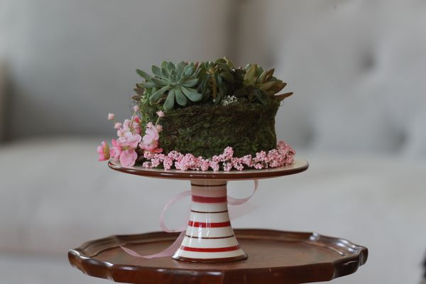 Succulent Home or Office decor