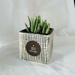 Succulent Gift , Desk Succulent, Office Decor for Sale in Los Angeles, CA