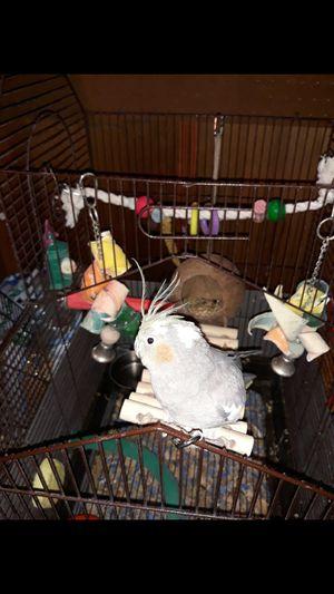 Bird for Sale in Montpelier, MD