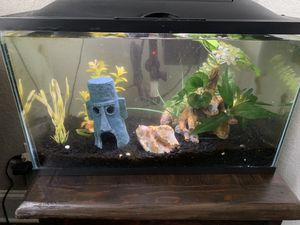 2 Fish tanks and fish- price is per tank for Sale in Spring, TX