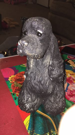 Doggie for Sale in Tulsa, OK
