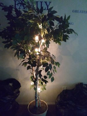 Tree with lights for Sale in Mesa, AZ
