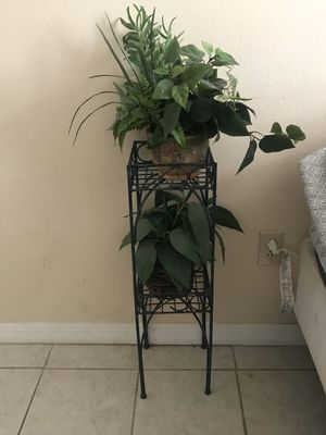 Plant, rack and lamp for Sale in Gainesville, FL