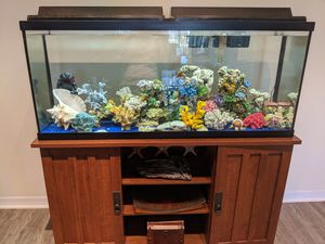55 gallon aquarium with wood stand for Sale in Jensen Beach, FL