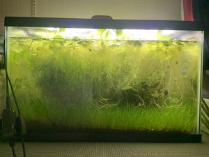 15 gallon aquarium with plants for Sale in San Francisco, CA