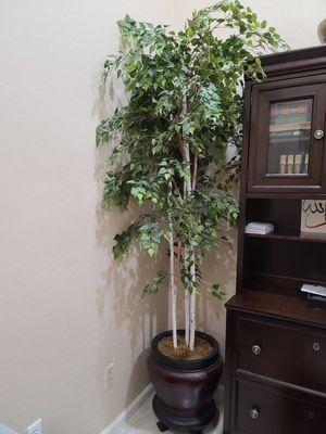 Decorative plant for Sale in Chandler, AZ