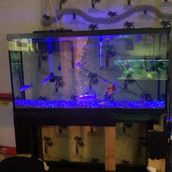 Fish Tank With Supplies for Sale in Sanger,  CA