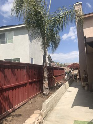 Free palm tree for Sale in Winchester, CA