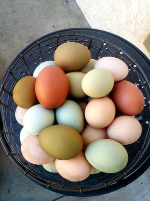Fresh eggs for Sale in Riverside, CA
