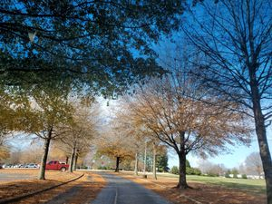 Optimal health with a Health coach for Sale in Greenville, SC