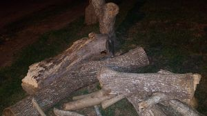 Free firewood for Sale in Victoria, TX