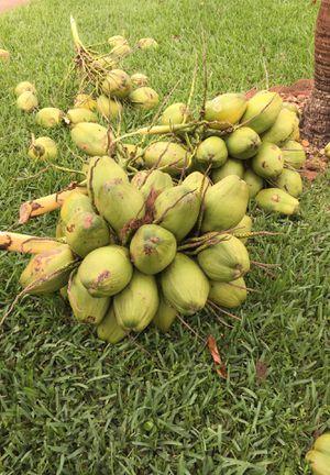 Fresh coconuts 2 per dollar for Sale in West Palm Beach, FL