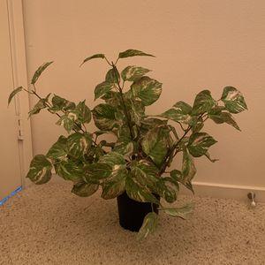 Fake Plant Decor for Sale in Bellevue, WA