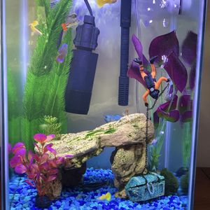 Top Fin 10gallon High Fish tank for Sale in Fort Lauderdale, FL