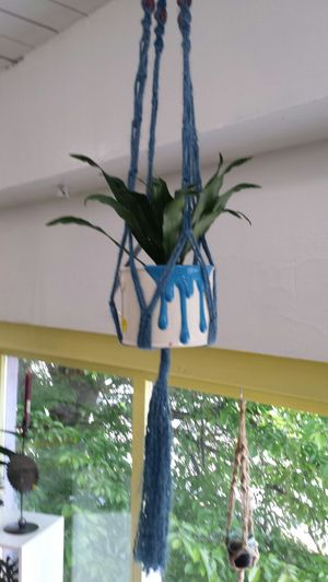 Live plant in a fun paint can with macrame hanger - so cute for Sale in Tacoma, WA