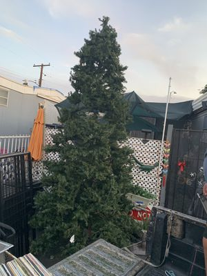Árbol navideño for Sale in Phoenix, AZ