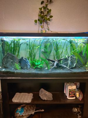 Fish tank setup for Sale in Clearwater, FL