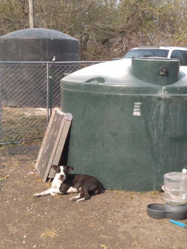 3000 gallon water tank and 2000 gallons tank with new shallow well pump