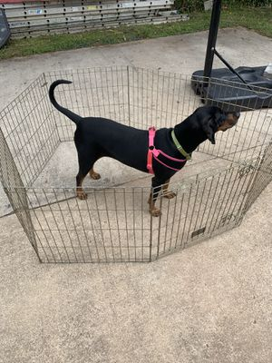 Dog cage for Sale in Falls Church, VA
