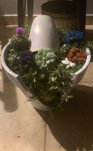 Succulent arrangements for Sale in Hialeah, FL