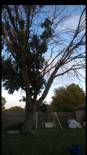 Free tree for Sale in Dallas, TX