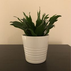IKEA Plant in Pot for Sale in Walnut Creek,  CA