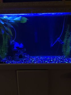 30 Gallon Breeder Tank for Sale in Garden Grove,  CA