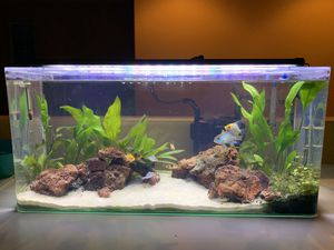 20 gallon acrylic tank aquarium with all equipment included (canister filter/heater/led light) for Sale in Winchester, CA