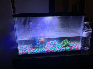 Fish Tank W/ Decorations for Sale in Clifton Heights, PA