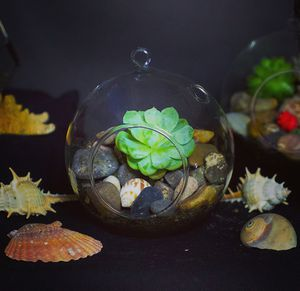 Succulent plant terrarium for Sale in Downey, CA