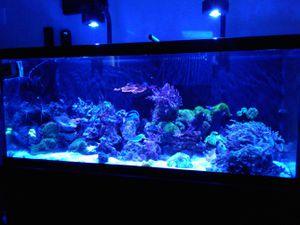 Fish tank saltwater for Sale in Phoenix, AZ