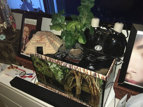 Terrarium tank, double bulb heat light, heating pad, thermometer, stone &plant decorations, and feeding bowls.