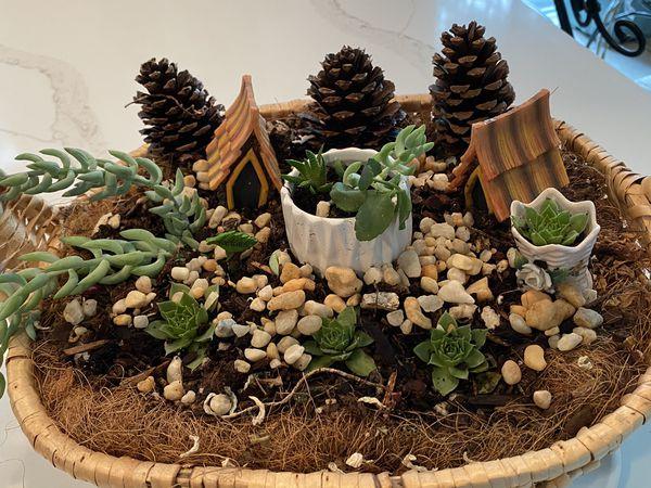 Miniature succulent garden