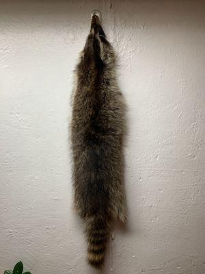 Raccoon Pelt for Sale, used for sale  Kenosha, WI