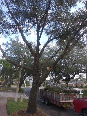 Wayne's Tree Service for Sale in Lake Wales, FL