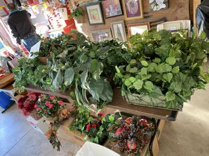 Silk plants greenery in a basket. Art and pictures. for Sale in Cottleville, MO