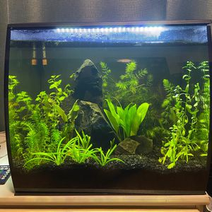 Fluval Flex 15 Gallon for Sale in Tacoma, WA