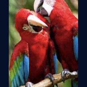 Jaulas grandes For Big Bird Pájaros No Incluidos for Sale in Elk Grove, CA