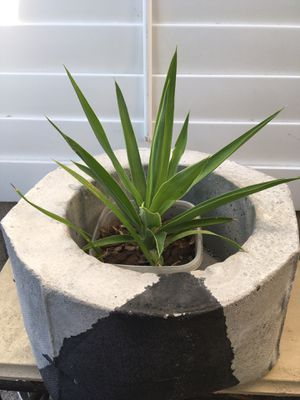 Very heavy concrete pot. Weight about 20 pounds or more great for any space. Measure about a ft. Firm 49. Plant not included for Sale in Fresno, CA