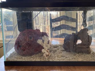 10 Gallon Saltwater Tank for Sale in Kennesaw,  GA