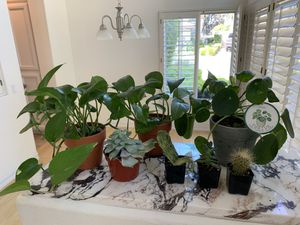 3 Plants & 4 cacti for Sale in Anaheim, CA