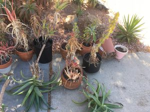 Free plants and pots succulents for Sale in San Diego, CA