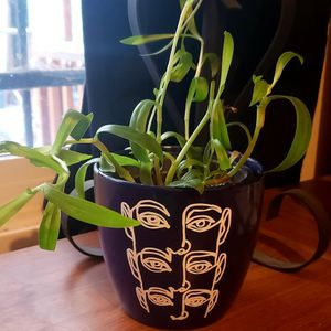 Vining Plant With Planter Pot for Sale in Colorado Springs, CO