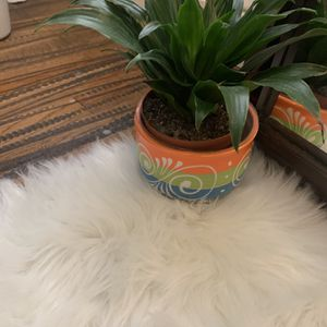 Small Real Plant for Sale in Irving, TX