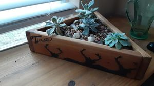 Hand crafted succulent planter with succulent plants for Sale in Fort Worth, TX