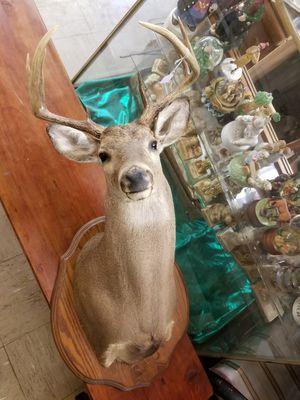 Deer head for Sale in Spout Spring, VA