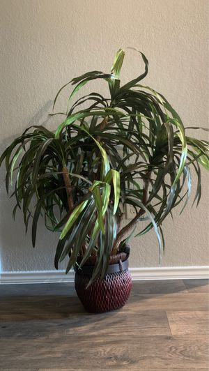 Beautiful Fake House Plant for Sale in Conroe, TX