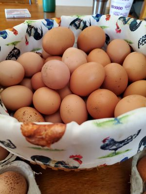 Free Range Chicken Eggs for Sale in Carlisle, KY