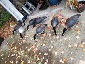 Goose decoy feeders With motion stake for Sale in McHenry, IL