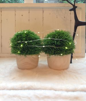 NEW TWO EVERGREEN ROUND FORM TOPIARY IN LIGHT WOOD POTS for Sale in Thousand Oaks, CA